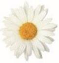 Daisy150plus